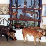 Neoi Psathades, Folk Arts & Zoological Museum of Nei Psathades