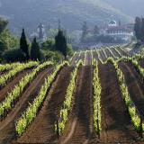 Agios Pavlos, a view of the vineyards of Tsantalis wine maker