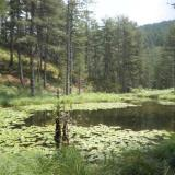Lake with water lilies. Greveniti, East Zagori