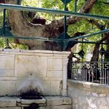Fountain-sarcophagus under Hippocrates Plane tree