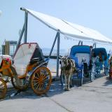 Buggies used for transportation