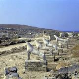 Delos; the sacred way of the Lions